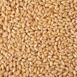 5kg grano biologico (DE-ÖKO-006)
