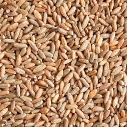 5kg organic rye (DE-ÖKO-006)